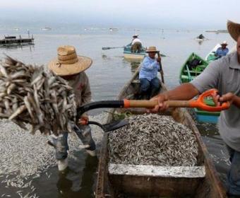 Dalğalar 50 ton ölü balığı sahilə atdı